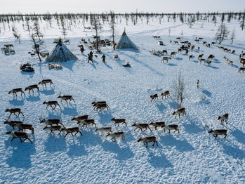 Camp of the nenets reindeer herders from above: conus tensts called chum, wooden sleds with stuff, d...