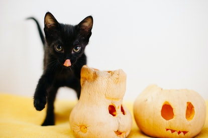 Black cats are classic Halloween symbols, but they aren't bad luck.