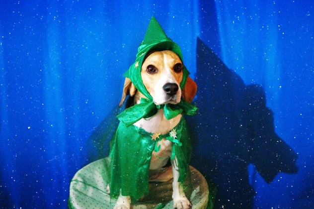 dog dressed in green wizard costume with blue background