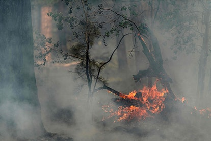 Trees smolder and burn in Division Echo Echo of the Bootleg Fire on July 25, 2021 in the Fremont-Win...