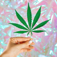 Cannabis leaf in woman hand on light holographic background