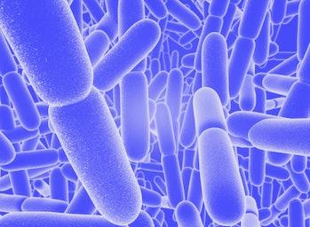 Bacillus subtilis bacteria, computer illustration. Bacillus subtilis, also known as grass bacillus o...