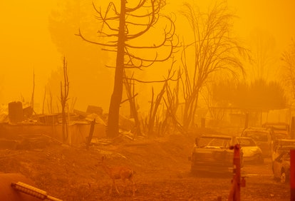 A deer wanders through a burned property in heavy smoke during the Dixie fire in Greenville, Califor...