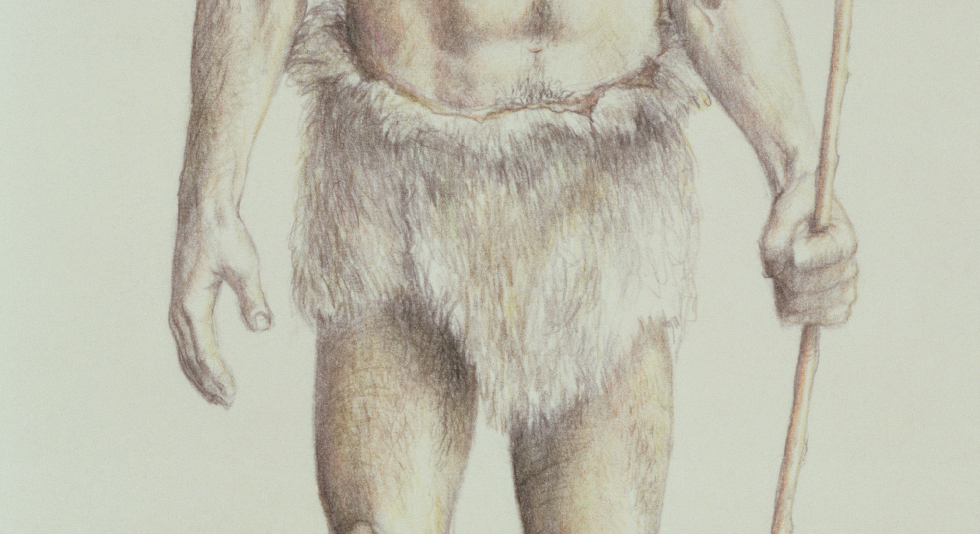 Neanderthal Man (pencil on paper) (Photo by Art Images via Getty Images)