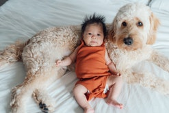 Asian baby girl is lying against a Goldendoodle puppy on a bed