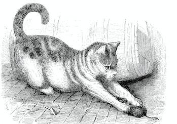 House cat with a captured mouse, Felis domestica, 1880  /  Hauskatze mit einer erbeuteten Maus, Feli...
