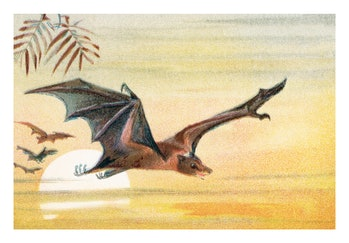Antique Illustration, Copyright has expired on this artwork. From my own archives, digitally restore...