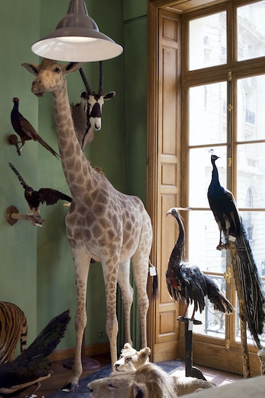 Naturalised animals are pcitured at the Deyrolle shop in Paris on July 16, 2013, after repair work f...