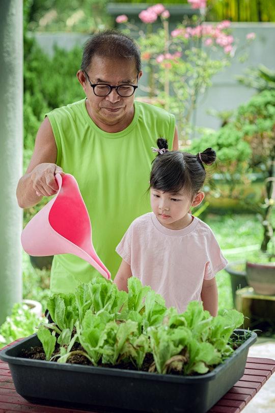 Grandpa teaching watering vegetables