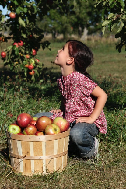 Apple picking is one fall bucket list idea to enjoy this autumn.
