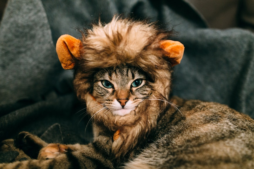 10 Halloween Costumes For Cats That Will Instantly Melt Your