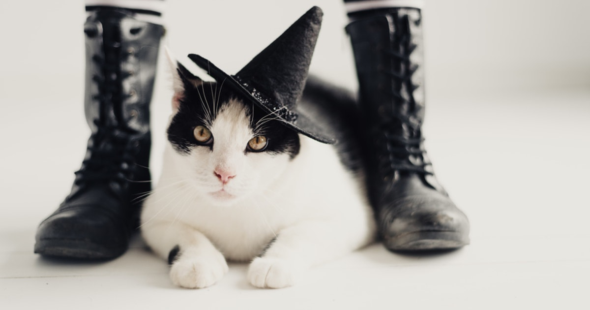 9 Costumes To Wear With Your Cat This Halloween That Are ...