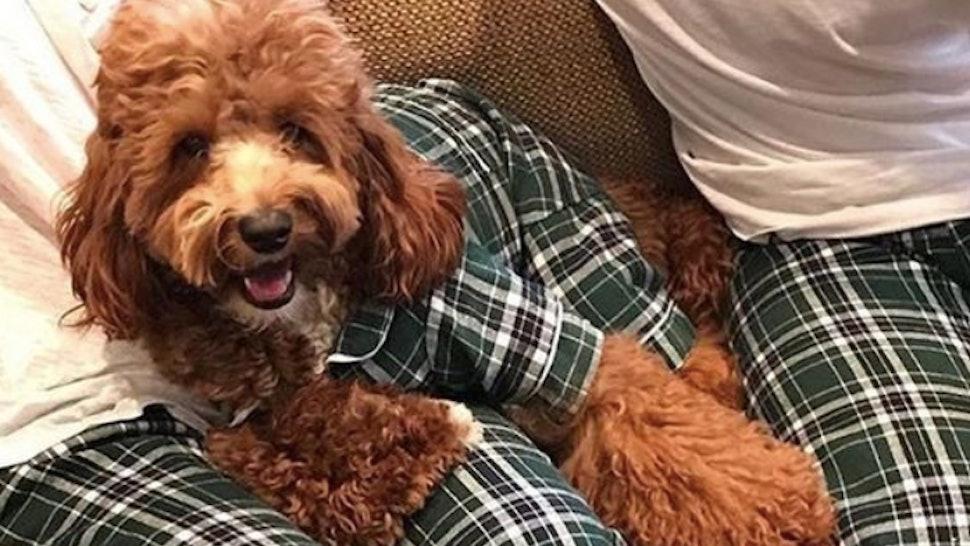 Matching Holiday Dog Owner Pajamas