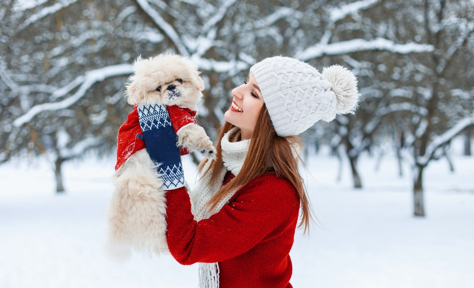 5 matching christmas sweaters for dogs owners that are pawfect for the holidays