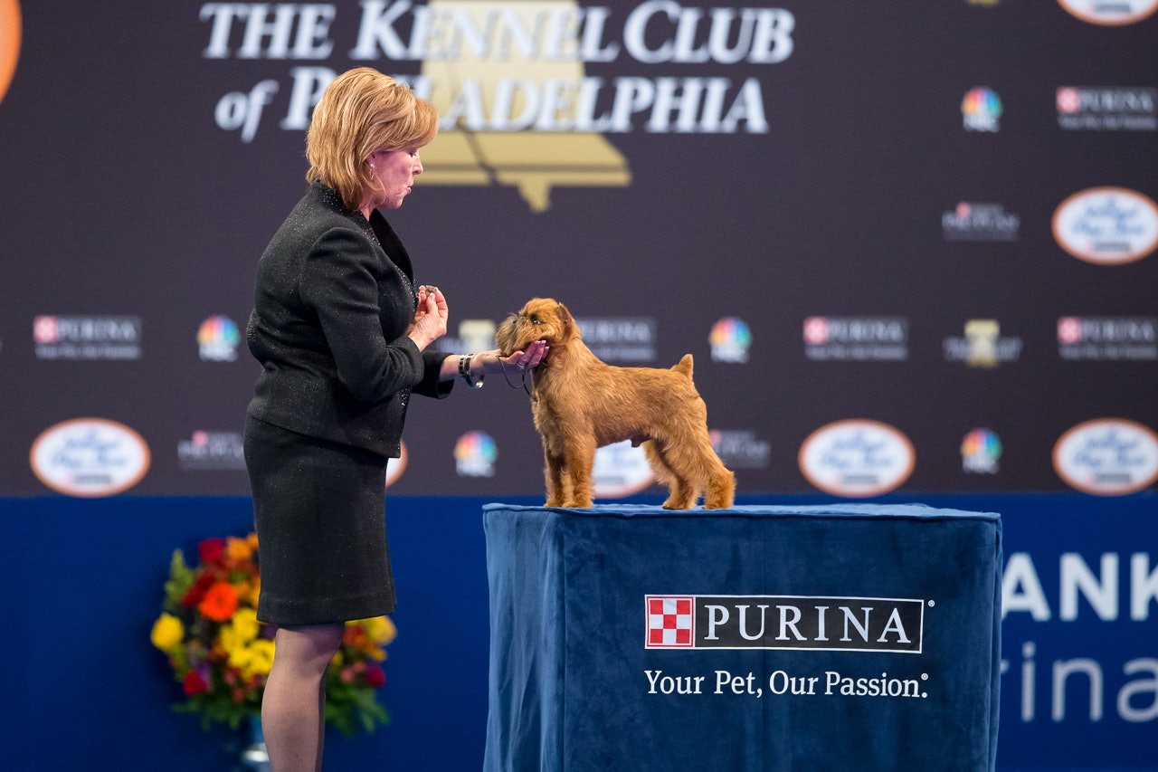 National Dog Show Thanksgiving  Results