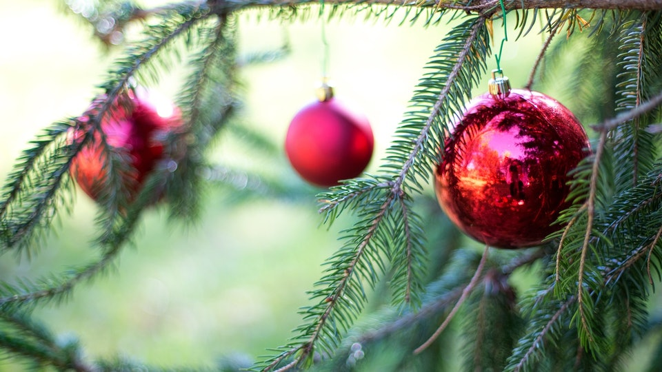 how to tell if your baby is allergic to christmas trees according to a pediatrician