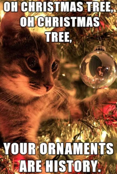 20 Funny Christmas 2017 Memes To Get You Into The Holly