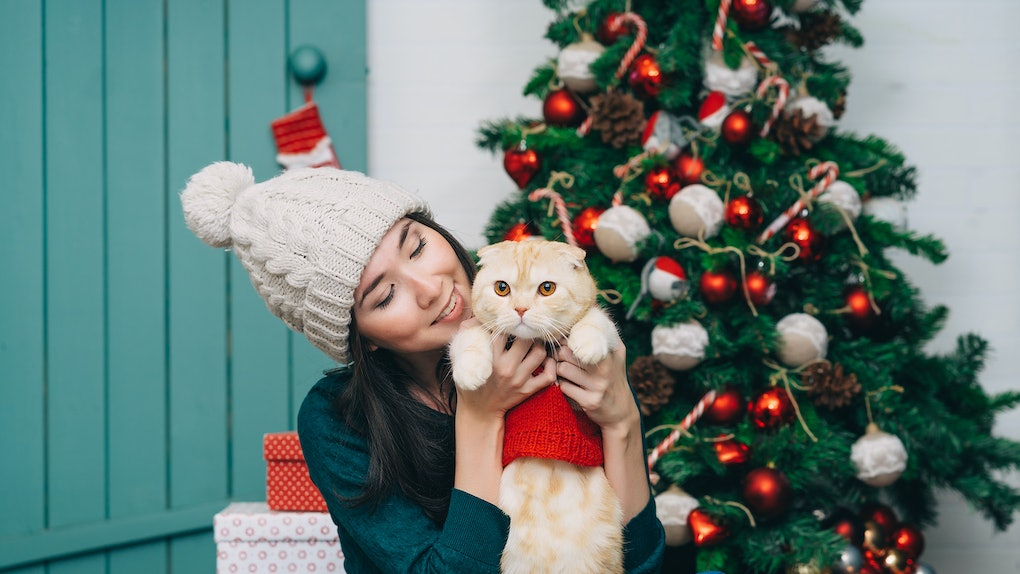- 10 Cats In Christmas Outfits Who Are Seriously Hating Life