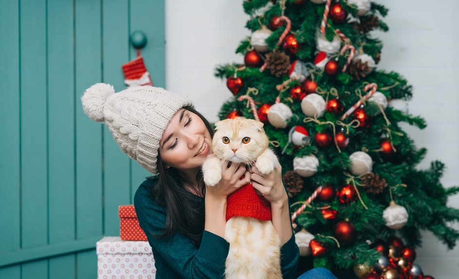 10 Cats In Christmas Outfits Who Are Seriously Hating Life