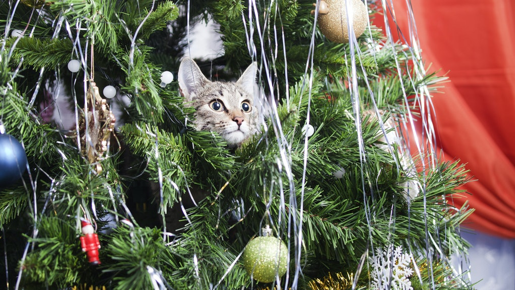 Cats Vs Christmas Trees.15 Cats In Christmas Trees Who Are Seriously On Santa S