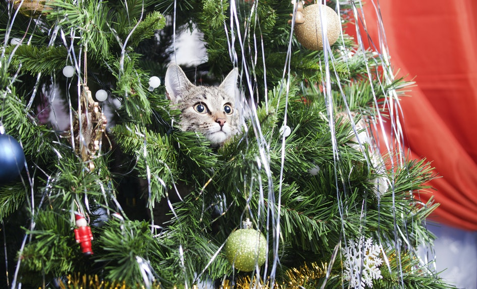 15 cats in christmas trees who are seriously on santas naughty list