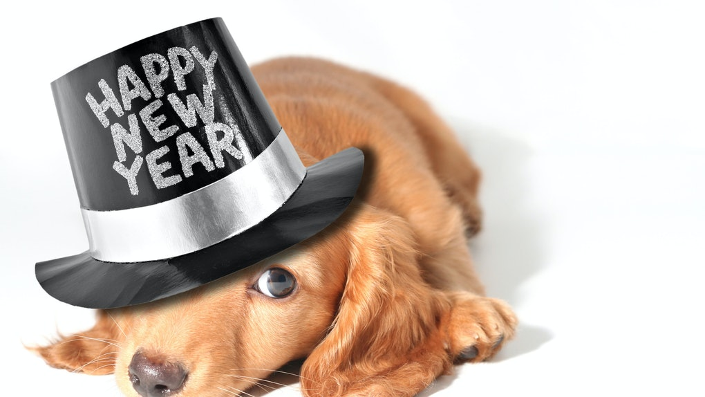12 Dogs In New Year's Eve Hats Who Are Literally Our ...