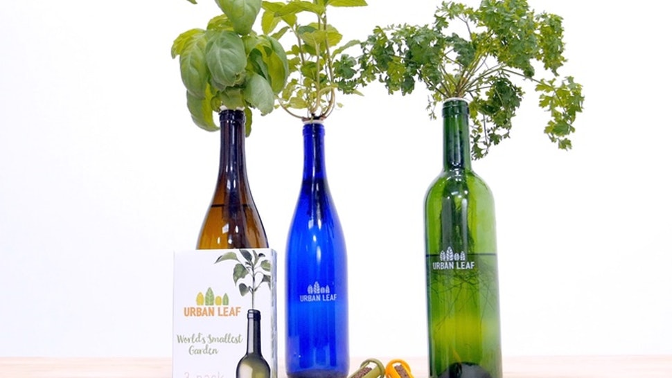 Grow Your Own Herbs In Wine Bottles Using The Affordable Worlds