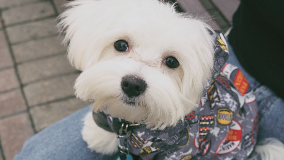 Dog Love Quotes | 15 Dog Quotes To Use As Instagram Captions On National Dog Day 2017
