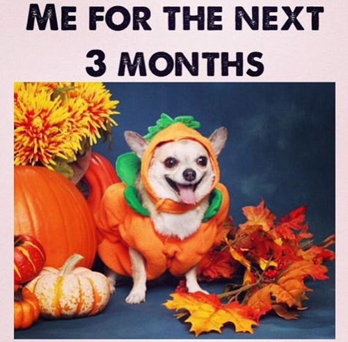 Fall Memes For 2017 That Will Get You In The Pumpkin Spice Latte