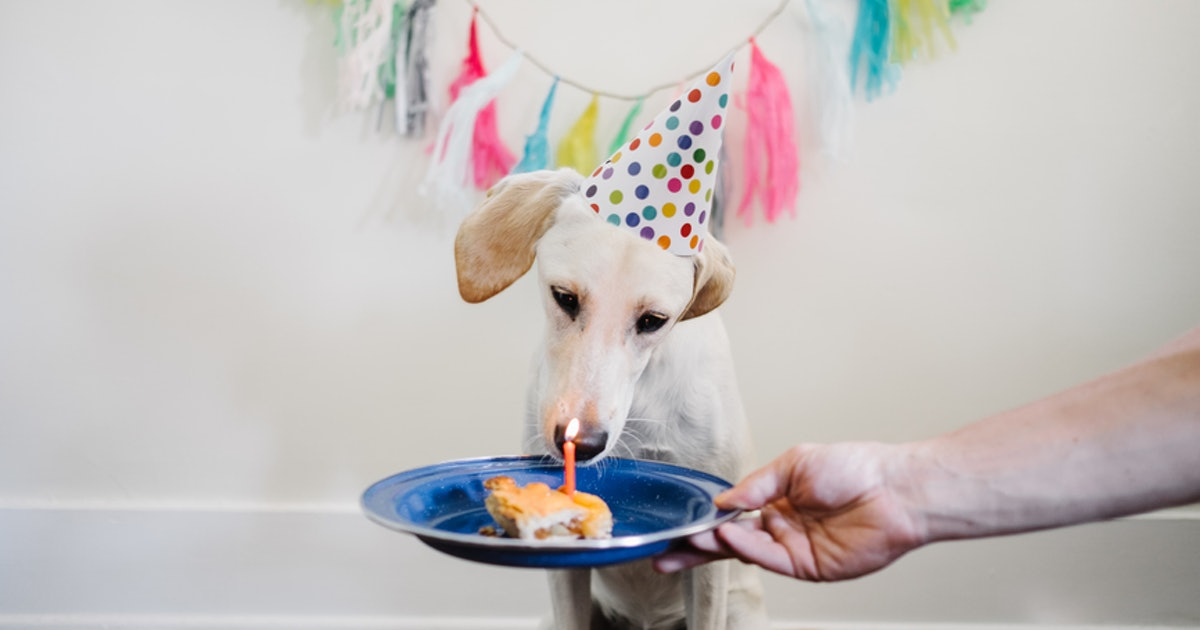 75b82cf67b 6 Unique Ways To Celebrate Your Dog's Birthday With A Paw-Ty They Won't  Forget