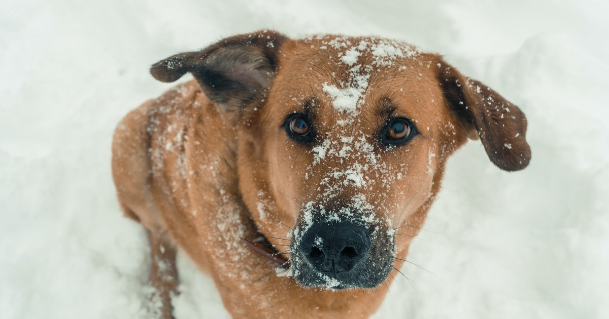 6 Ways Your Dog Is Trying To Tell You That They're Too Cold Outside