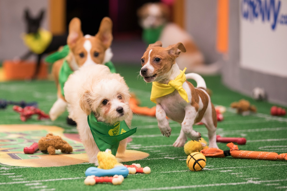 2018 Puppy Bowl Puppies, Ranked By Cuteness For Your Fluffy Enjoyment