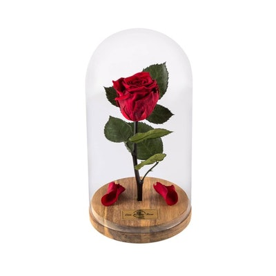Beauty And The Beast Rose in Glass Dome