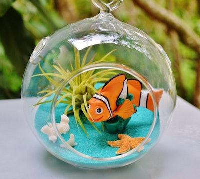 Finding Nemo Terrarium Kit