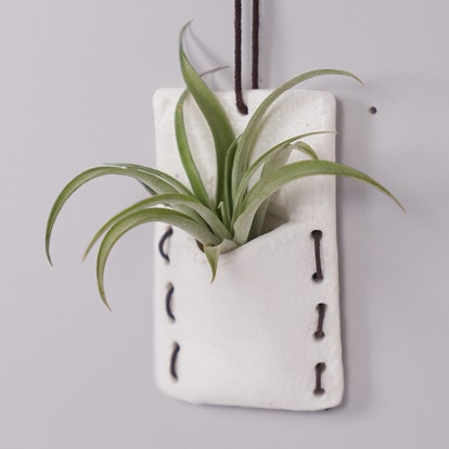 Tilly Wall Pocket With Mini Air Plant