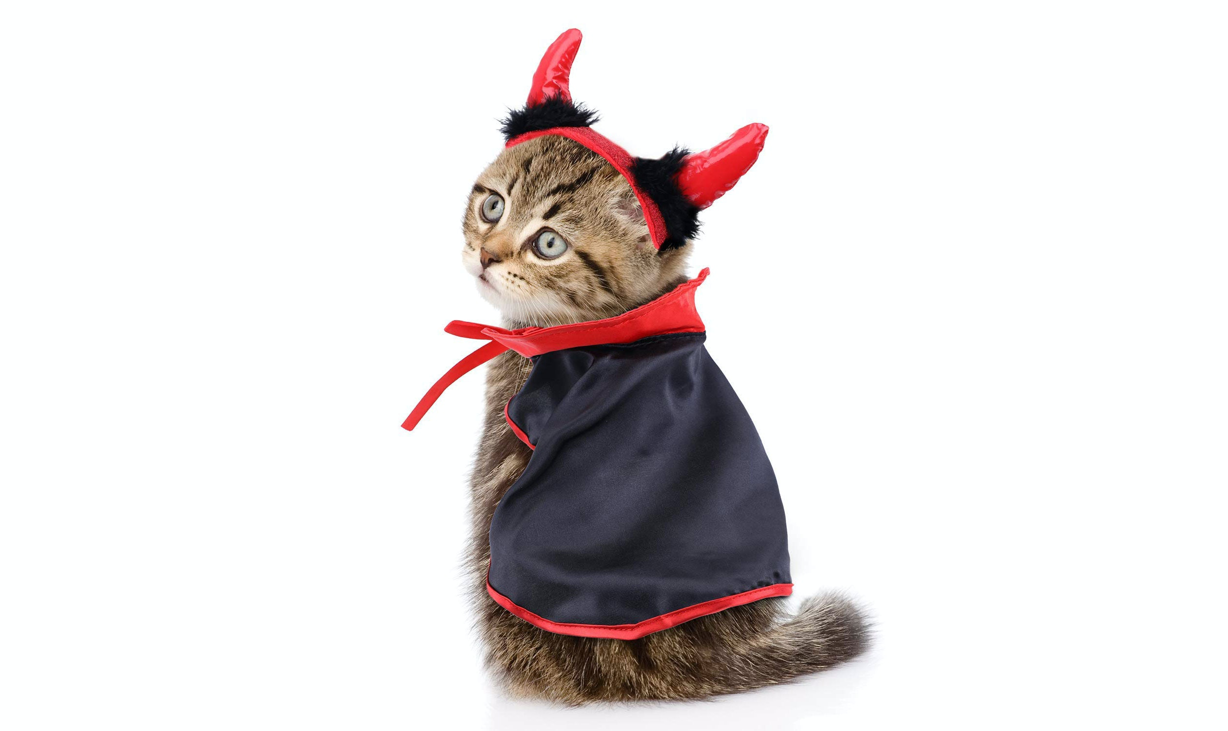 The 9 Best Halloween Costumes For Cats
