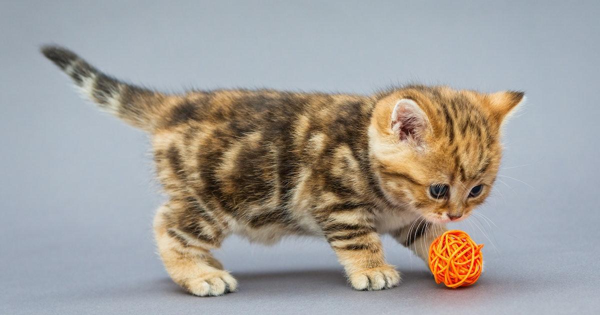 5 Safe Toys For Kittens
