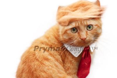 Prymal Comfort Trump Cat Costume