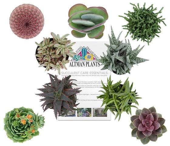 Altman Plants Tough As Nails Collection 6 Pack