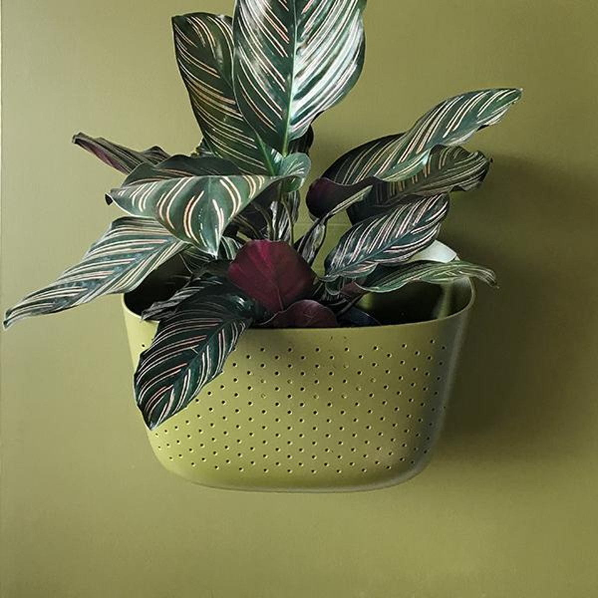 Wally Eco Planter - Olive