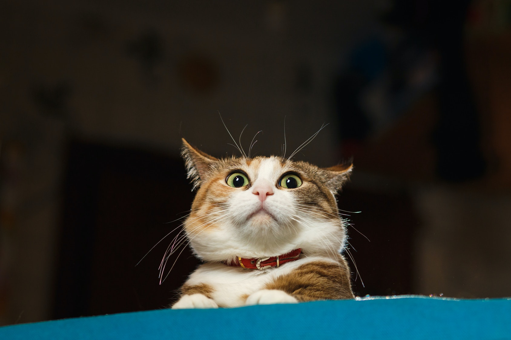Funny cat pictures Compilation 38 Funny Cat Gifs Because Your Feline Is Not The Only One That Acts That Way Romper 38 Funny Cat Gifs Because Your Feline Is Not The Only One That Acts