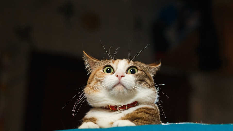 38 Funny Cat Gifs Because Your Feline Is Not The Only One