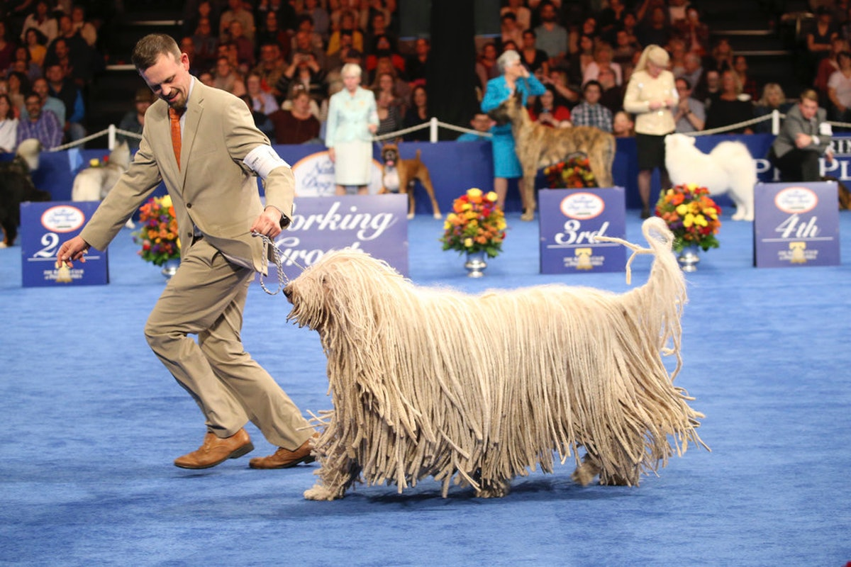 Here's How To Watch The 2018 National Dog Show