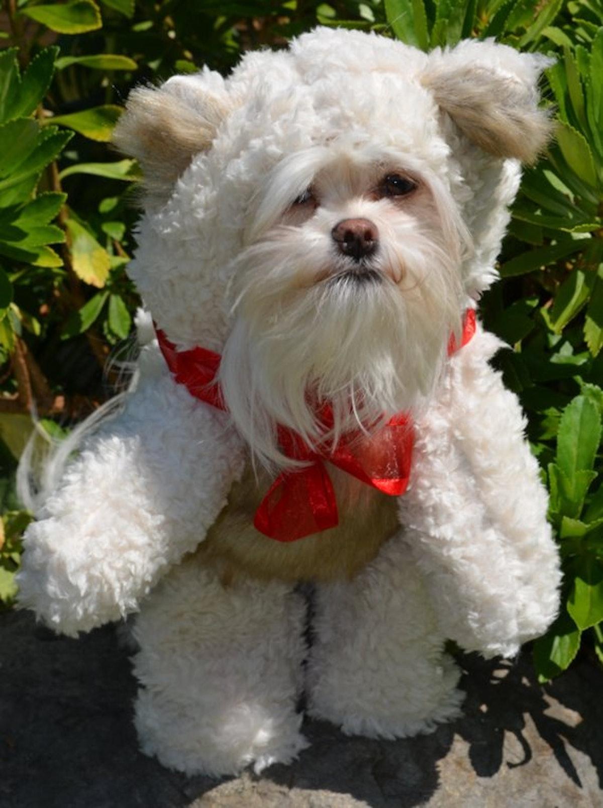 Soft Cream colored Teddy Bear (Looks Like It Is Walking) Dog Costume