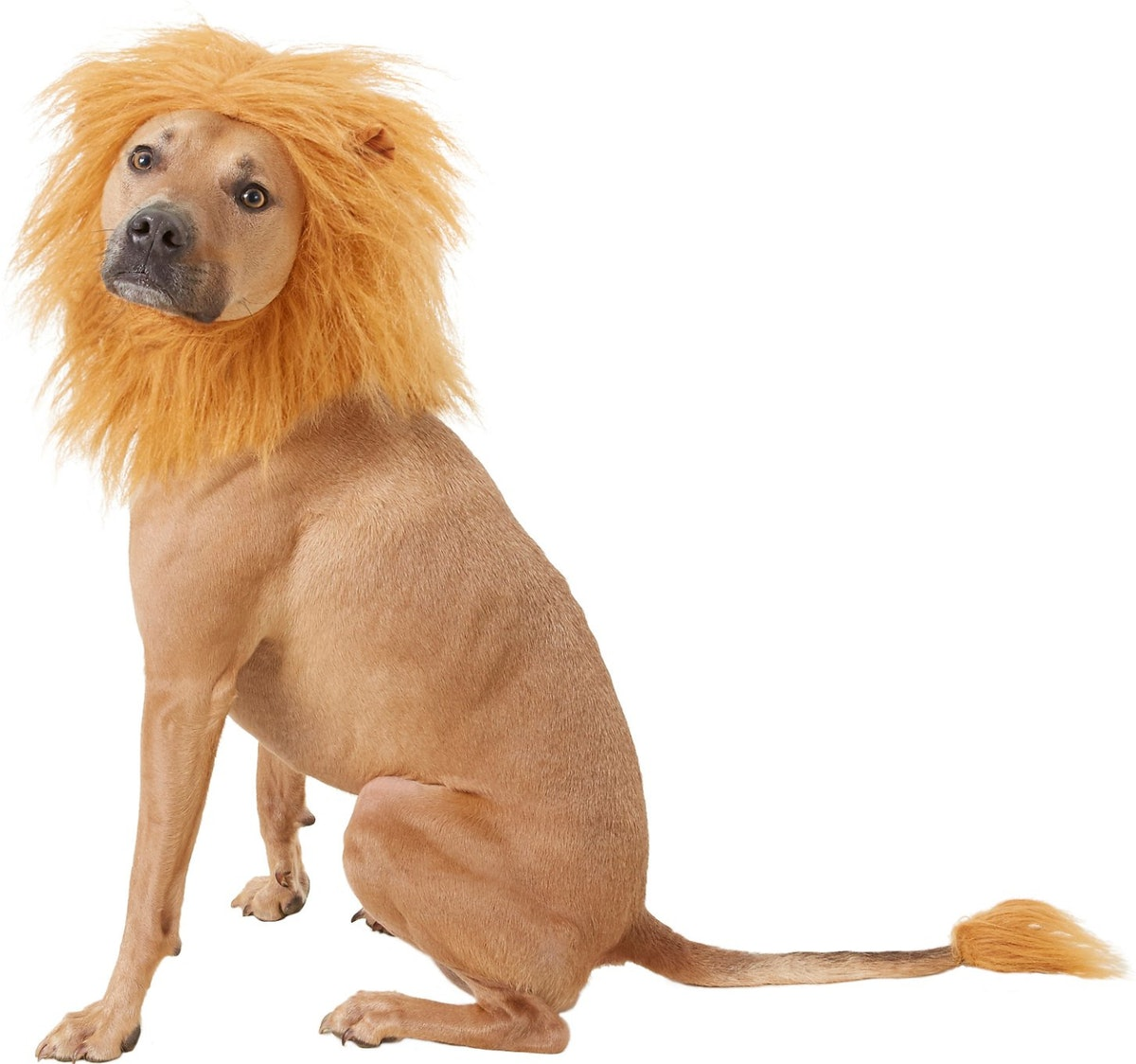Frisco Lion Mane with Tail Dog & Cat Costume