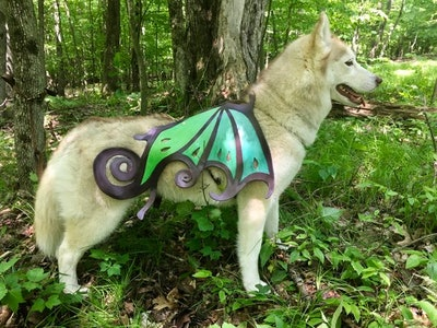 Fairy Dog Wings With Free Harness