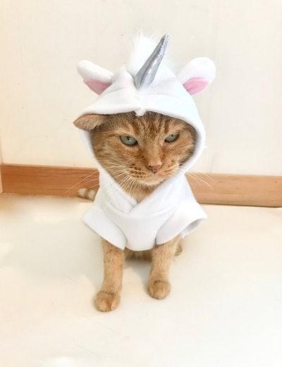 Unicorn Costume For Pets Unicorn Cat