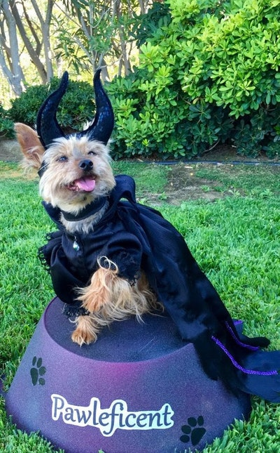 Maleficent Dog Costume