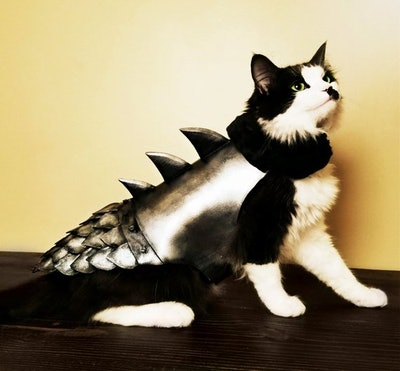 Winter Is Coming Cat Armor