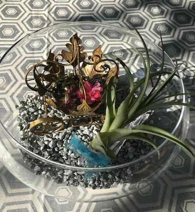 Cinderella Tillandsia Terrarium